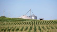 Grains: Prices steady as market weighs U.S. harvest rain and export prospects