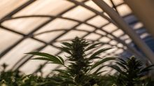 Better Marijuana Stock: Cronos Group vs. Village Farms