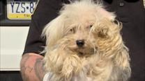 Dogs, cats rescued in Northeast Philadelphia raid