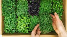 Microgreens: como plantar hortaliças supernutritivas em casa