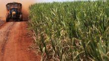 Raízen vê safra de cana menor no Brasil, com etanol competitivo