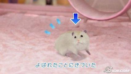 Japan offers virtual hamster game to download