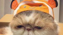 Buona, una gatita adorable y con mucho estilo