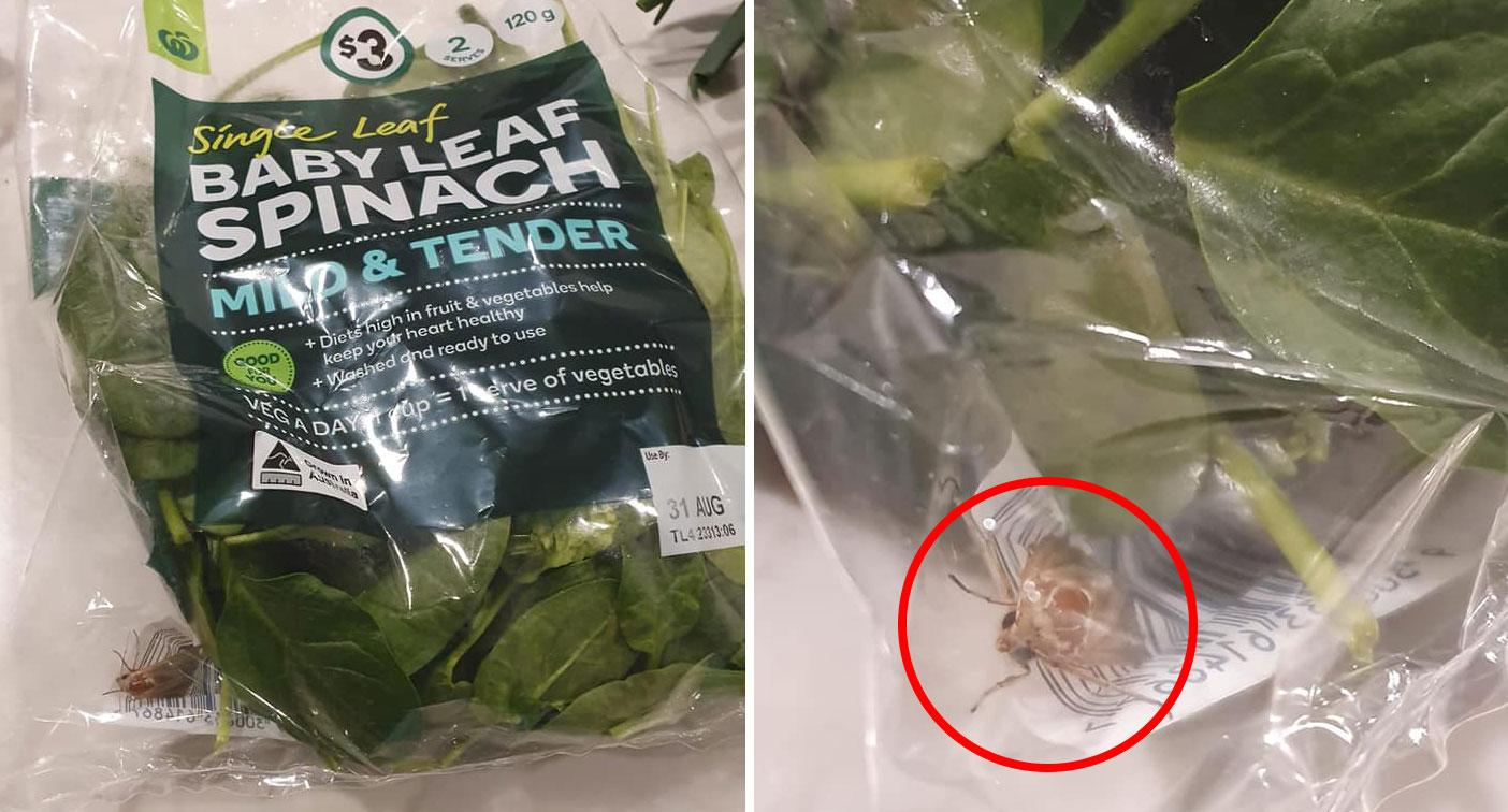 'It's alive': Woman horrified at 'gross' discovery in her spinach