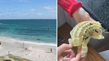 'It's bendy': Mum confused by bizarre find on Aussie beach