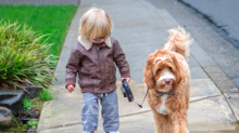 The heartwarming and adorable friendship between a toddler and his pet labradoodle