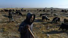 La sequía casi perenne obliga a los pastores afganos a tomar medidas drásticas