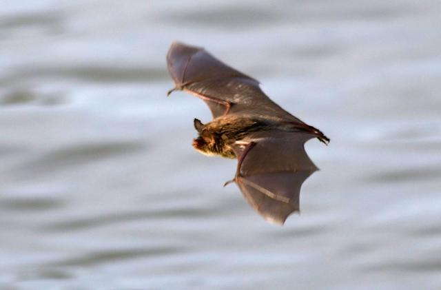 Saving bats from wind turbines is easy