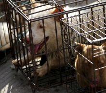 China Reclassifies Dogs from Livestock to Pets in Response to Coronavirus