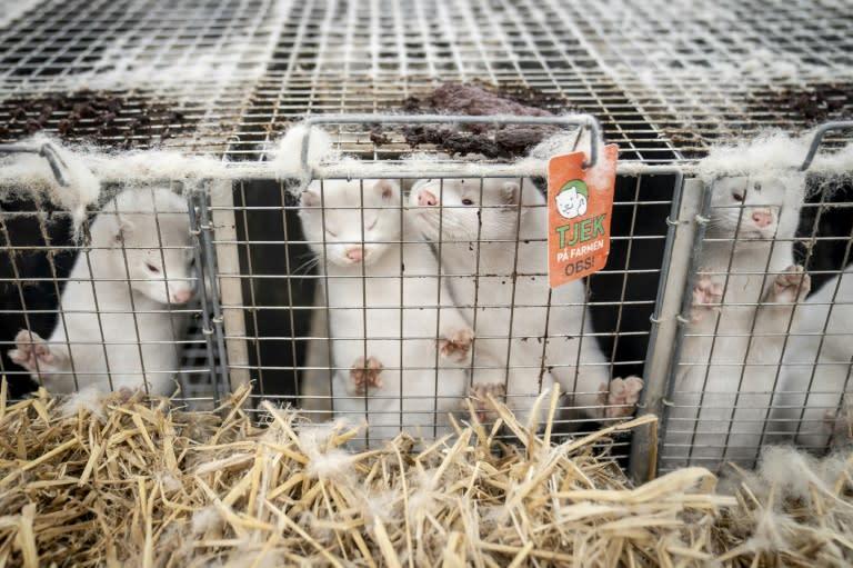 Six countries reported coronavirus on mink farms, WHO says