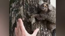 Heartwarming moment baby monkey is reunited with mother