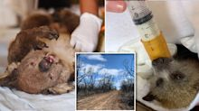 'Animals are dying and starving': Call for charity to release more donations