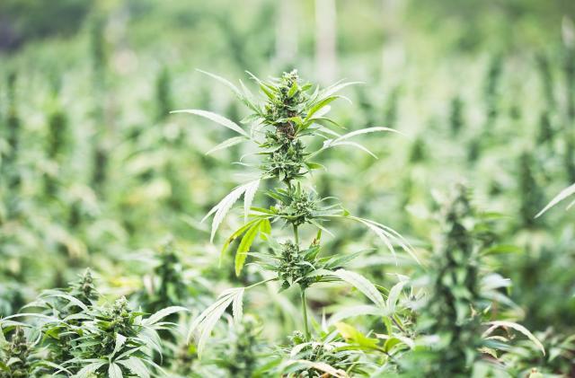 FDA approves its first marijuana-derived drug