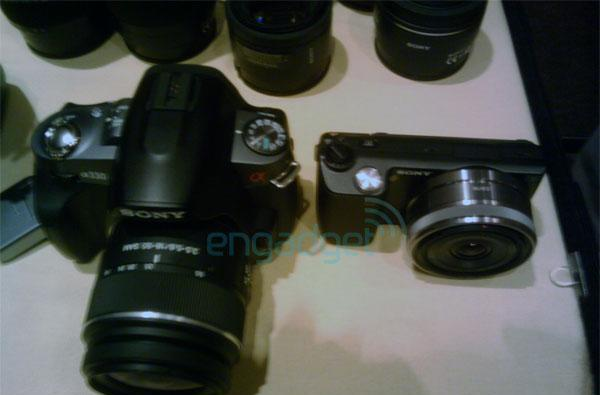 Sony Alpha NEX-5 in the wild, plays David to A330's Goliath