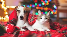 Best Christmas presents for pets - and their owners - under £20