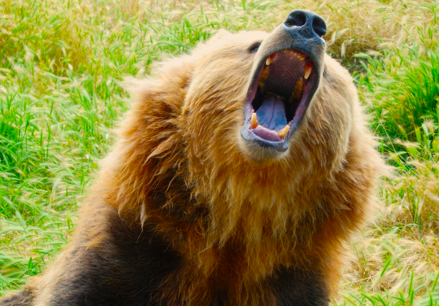 Morgan Stanley: 'We are in a bear market'