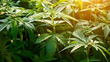 Nicht alles nur Schall und Rauch: Fünf Argumente, Hanf als Nutzpflanze zu etablieren