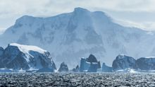 Scientists unearth fossils that reveal how Antarctica was once covered in forests