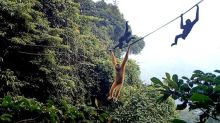 Scientists throw lifeline to world's rarest primate