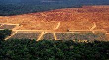 Mais de 2 mil imóveis irregulares em terras públicas na Amazônia podem ser legalizados por 'MP da grilagem'