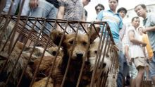 Animal rights groups claim notorious Chinese dog-eating festival 'has been closed down'