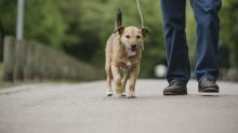 Dog owners in Australia face fines for not letting their pet out at least once a day