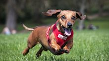 SoftBank Backs Dog DNA Startup Embark at $700 Million Valuation
