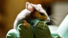 Cinco razones para usar productos libres de crueldad animal