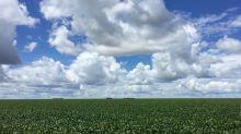 Chuva para soja do Cerrado terá antecipação de 1 mês ante 2019, diz Rural Clima