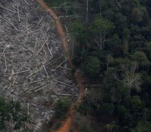 Brazil's environment minister quits amid illegal logging investigation