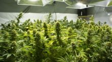 3 Things You Need to Know About Marijuana Stock Scotts Miracle-Gro