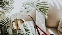8 products that help look after indoor plants