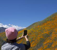 Aggressive Instagramming is ruining Southern California's super bloom