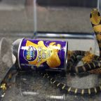 Worst Magic Trick Ever: Man Arrested for Smuggling Live Snakes in Potato Chip Cans