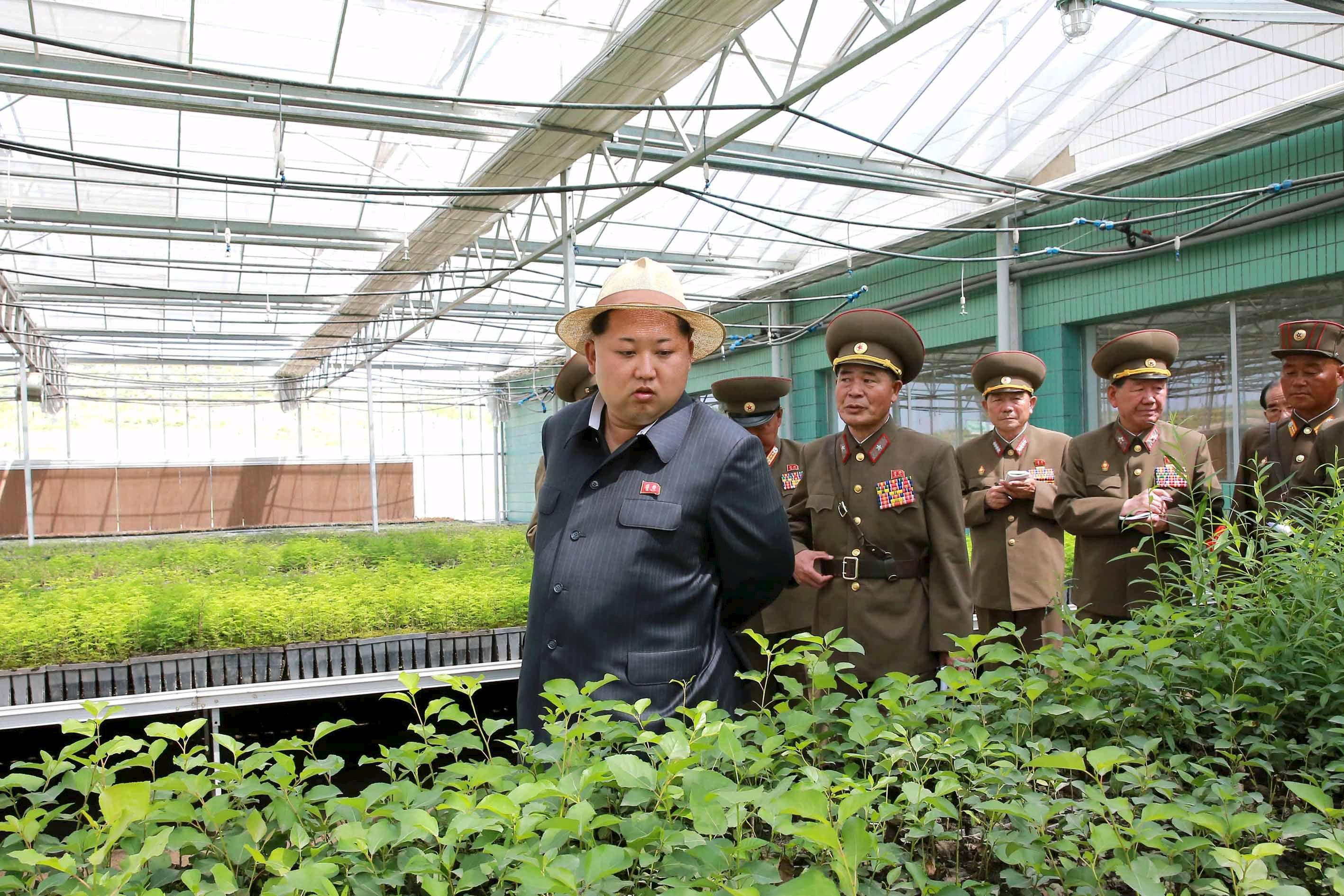 North Korean leader Kim Jong-un gives field guidance at a new tree nursery run by the military in this undated photo released by North Korea's Korean Central News Agency (KCNA) in Pyongyang May 29, 2015. REUTERS/KCNA SOUTH KOREA OUT. NO COMMERCIAL OR EDITORIAL SALES IN SOUTH KOREA THIS IMAGE HAS BEEN SUPPLIED BY A THIRD PARTY. IT IS DISTRIBUTED, EXACTLY AS RECEIVED BY REUTERS, AS A SERVICE TO CLIENTS NO THIRD PARTY SALES. NOT FOR USE BY REUTERS THIRD PARTY DISTRIBUTORS