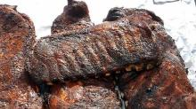 How to Make America's Best Ribs at Home