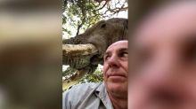 Un elefante puso en jaque a un guía de Zimbabue