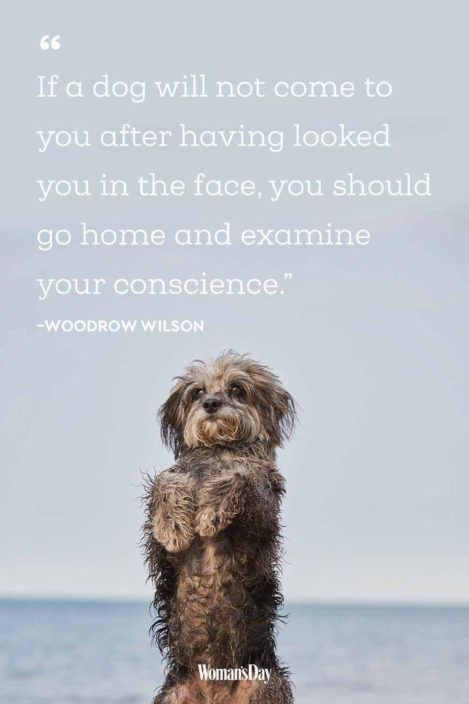 20 Best Dog Quotes That Perfectly Describe Your Fur Baby
