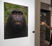 US court rules monkey does not own selfie copyright
