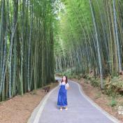 嘉義台版小京都!瑞里綠色隧道,漫步竹林之中,真像置身於日本呢~