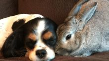 Bunny and dog make the most adorable and unexpected best friends