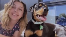 'Absolutely disgraceful': Woman's pet dog vanishes from kennel on ferry trip