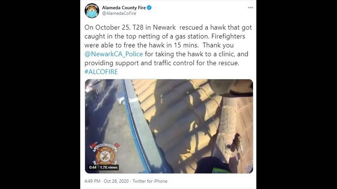Dramatic bird rescue caught on camera as California firefighters save trapped hawk