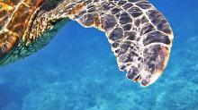 性別比例出現異常!氣候暖化可能對海龜造成這3個影響