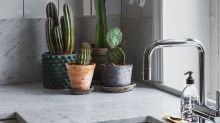 How to Care For Succulents So They Thrive All Year Long