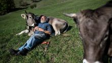 Cow cuddling: The latest therapeutic trend taking off in the US