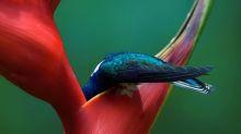 Audubon Society announces 2019 bird photography award winners