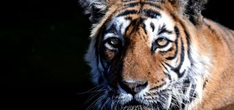 5 best places in India to spot tigers