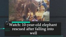 Watch: 10-year-old elephant rescued after falling into well