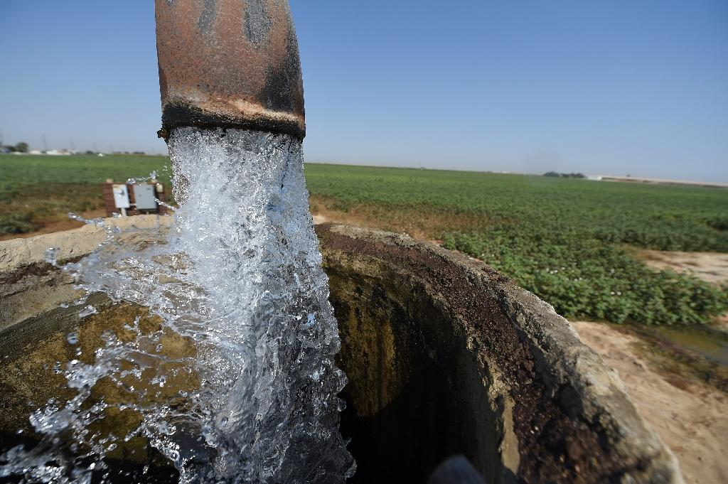 Agricultural fertilizers as well as cow manure from dairy farms have led to domestic wells in California's Central Valley having dangerously high levels of nitrates (AFP Photo/Robyn Beck )